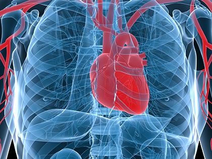 консультация кардиолога спб